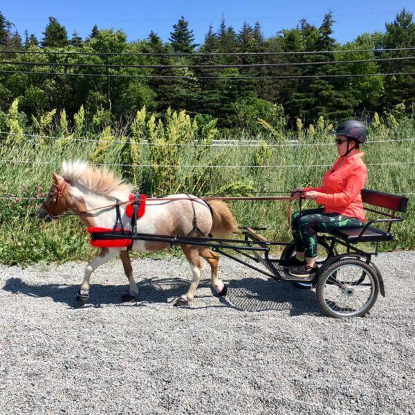 Cavallo_CLB-Hoof-Boots-for-Laminitis-Cavallo-Mini-horse