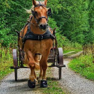 Hufschuhe-Mesche-Pferd-mit-Kutsche